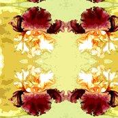 Rrrbearded_iris_watercolor1_shop_thumb