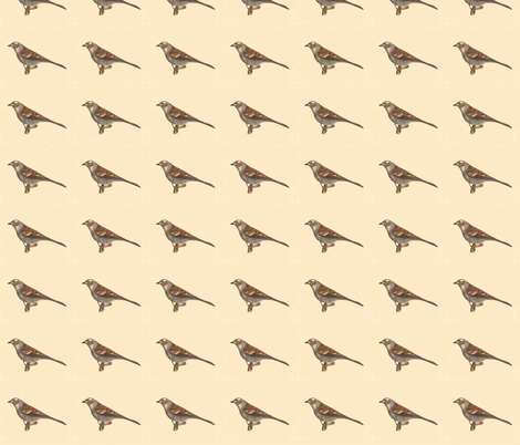 The White-crowned Sparrow - Bird / Birds fabric by zephyrus_books on Spoonflower - custom fabric