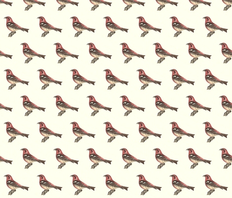 The White-winged Crossbill - Bird / Birds fabric by zephyrus_books on Spoonflower - custom fabric