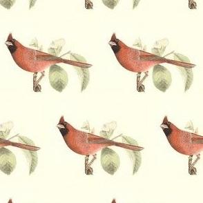 Cardinal - Bird / Birds