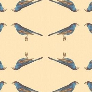 The Blue Grosbeak - Bird / Birds