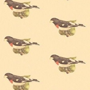The Rose-breasted Grosbeak - Bird / Birds