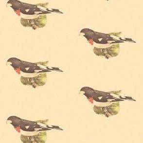 The Rose-breasted Grosbeak - Bird / Birds