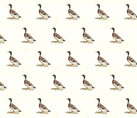 The Mallard (Wild duck) Bird - Birds / Ducks & Geese (Goose) fabric by zephyrus_books on Spoonflower - custom fabric