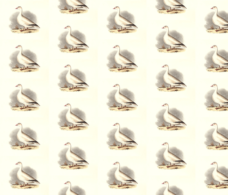 The Snow Goose Bird - Vintage Bird / Birds Print fabric by zephyrus_books on Spoonflower - custom fabric