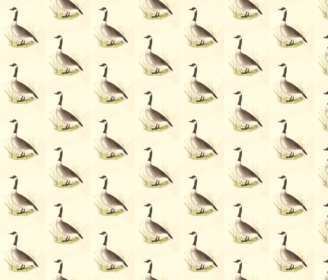 The Wild Goose (Canada Goose) Bird - Vintage Bird / Birds Print fabric by zephyrus_books on Spoonflower - custom fabric