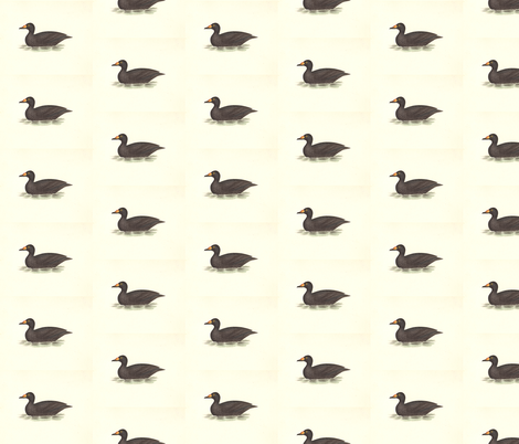 American Coot Bird - Birds / Ducks & Geese (Goose) fabric by zephyrus_books on Spoonflower - custom fabric