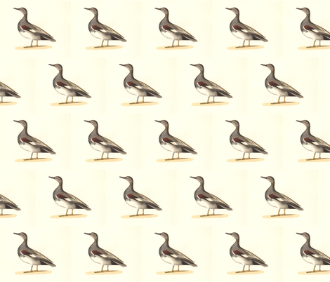 The Grey Duck (Gadwall) Bird - Birds / Ducks & Geese (Goose) fabric by zephyrus_books on Spoonflower - custom fabric