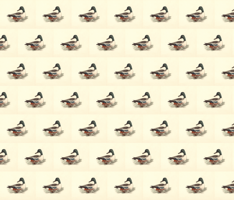 The Northern Shoveler Bird - Birds / Ducks & Geese (Goose) fabric by zephyrus_books on Spoonflower - custom fabric