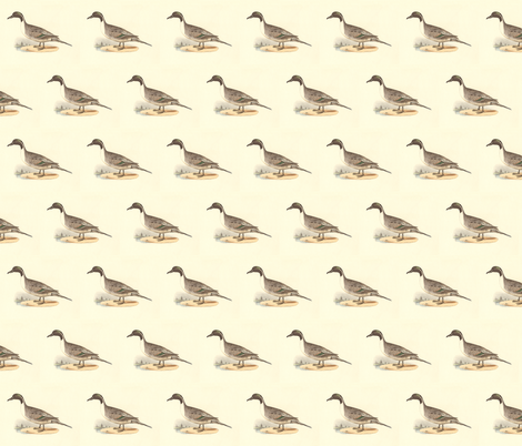 The Pintail Duck Bird - Birds / Ducks & Geese (Goose) fabric by zephyrus_books on Spoonflower - custom fabric