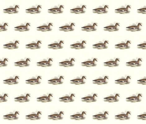 American Widgeon Bird - Birds / Ducks & Geese (Goose) fabric by zephyrus_books on Spoonflower - custom fabric