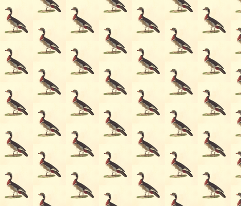 The Wood Duck Bird - Birds / Ducks & Geese (Goose) fabric by zephyrus_books on Spoonflower - custom fabric