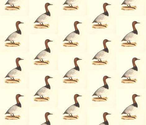 The Canvassback Duck Bird - Birds / Ducks & Geese (Goose) fabric by zephyrus_books on Spoonflower - custom fabric