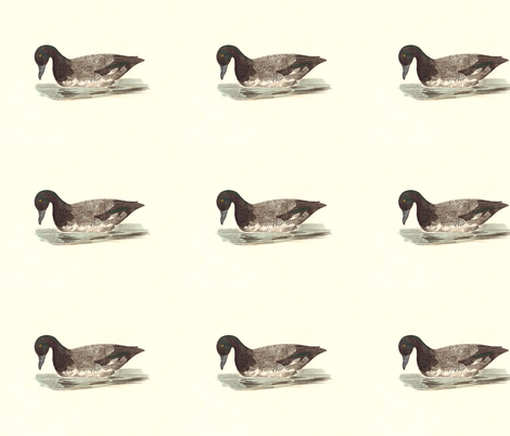 The Broadbill duck Bird - Birds / Ducks & Geese (Goose) fabric by zephyrus_books on Spoonflower - custom fabric