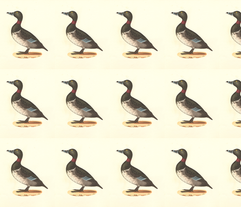 The Ring-necked Duck Bird - Birds / Ducks & Geese (Goose) fabric by zephyrus_books on Spoonflower - custom fabric