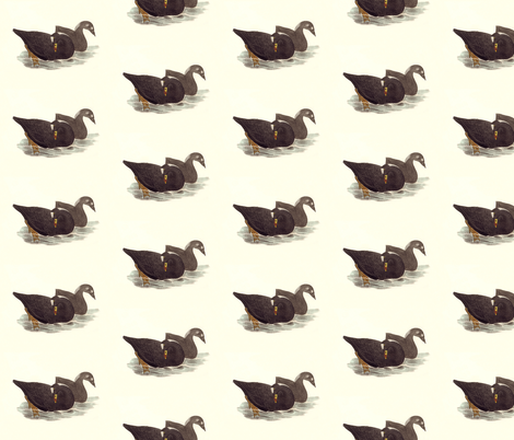 The Surf Duck (Coot) Bird - Birds / Ducks & Geese (Goose) fabric by zephyrus_books on Spoonflower - custom fabric