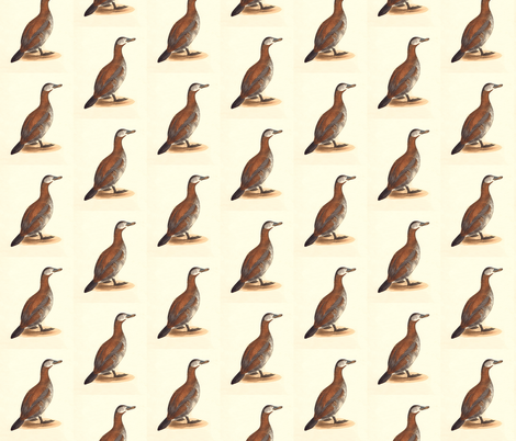 The Ruddy Duck Bird - Birds / Ducks & Geese (Goose) fabric by zephyrus_books on Spoonflower - custom fabric