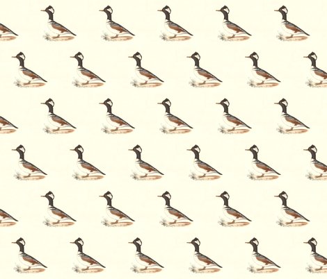 The Hooded Sheldrake Bird - Birds / Ducks & Geese (Goose) fabric by zephyrus_books on Spoonflower - custom fabric