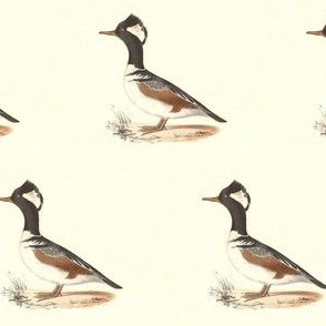 The Hooded Sheldrake Bird - Birds / Ducks & Geese (Goose)