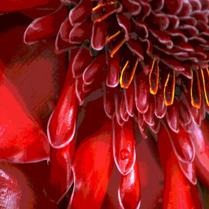 red flower with raindrop