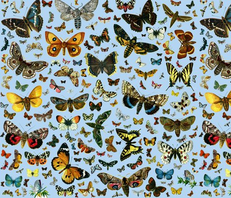 Rlarge_square_butterfly_poster_b4d5f1_shop_preview