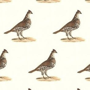 The Common Partridge - Bird / Birds