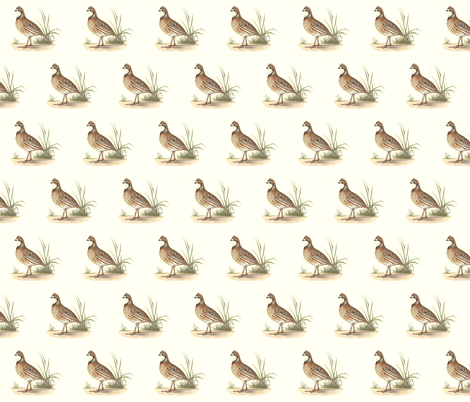 The American Quail - Bird / Birds fabric by zephyrus_books on Spoonflower - custom fabric