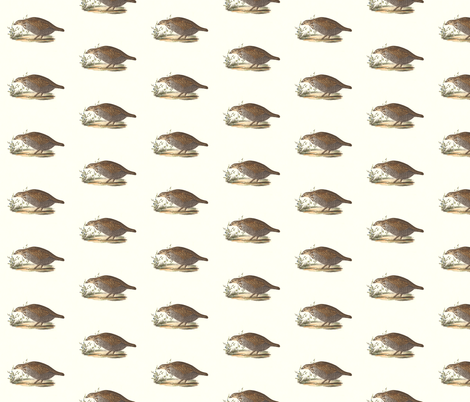 The Pinnated Grouse - Bird / Birds fabric by zephyrus_books on Spoonflower - custom fabric