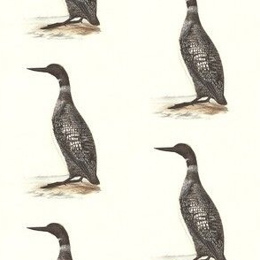 The Great Northern Loon - Bird / Birds