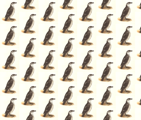 The Sea Dove - Vintage Bird / Birds Print (COMMON SEA-DOVE or LITTLE AUK) fabric by zephyrus_books on Spoonflower - custom fabric