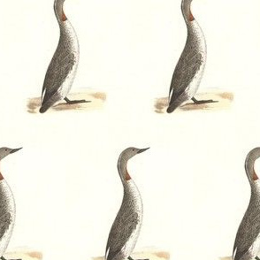 The Red-throated Loon (Red-throated Diver) - Bird / Birds