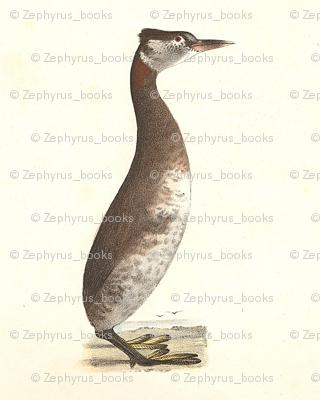 The Red-necked Grebe - Vintage Bird / Birds Print
