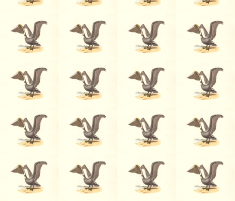The Brown Pelican - Vintage Bird / Birds Print fabric by zephyrus_books on Spoonflower - custom fabric