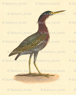 The Green Heron, or Poke - Vintage Bird / Birds Print
