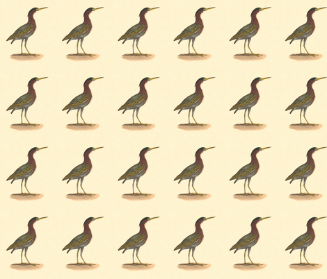 The Green Heron, or Poke - Vintage Bird / Birds Print fabric by zephyrus_books on Spoonflower - custom fabric