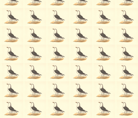 The Great Black-backed Gull - (Seagull or Sea Gull) Vintage Bird / Birds Print fabric by zephyrus_books on Spoonflower - custom fabric
