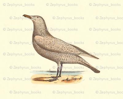 The Winter Gull - (Seagull or Sea Gull) Vintage Vintage Bird / Birds Print
