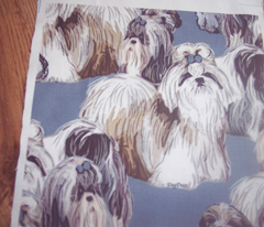 Shih Tzus In Blue