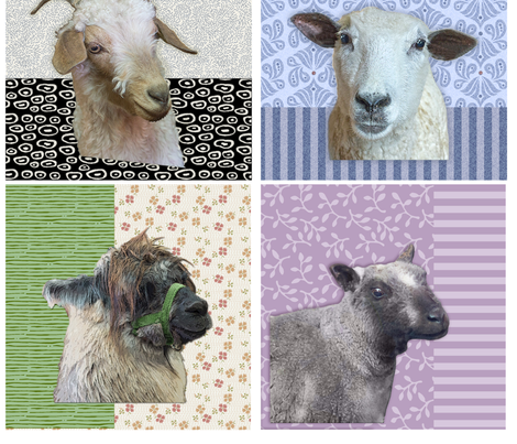 Sheep & Alpaca Portraits fabric by beckarahn on Spoonflower - custom fabric