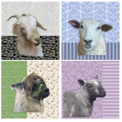 Sheep & Alpaca Portraits