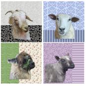 Sheep & Alpaca Portraits