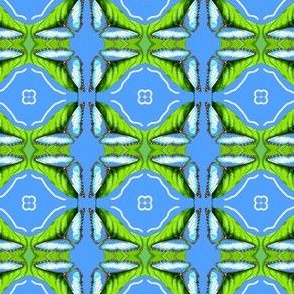 Blue Morpho Butterfly Welcomes Spring II