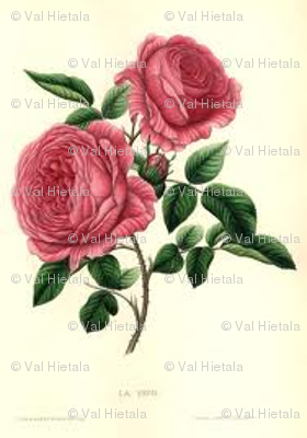 botanical rose