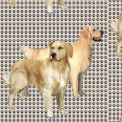Rr1099129_rrrrrtwo_goldens_shop_thumb