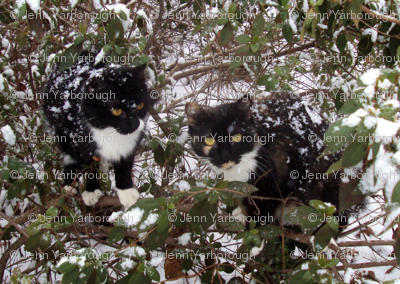 Cats in bush