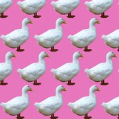 Rrrrrwhite_duck_on_pink_shop_thumb