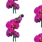 orchid_fabric2