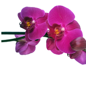 orchid_fabric3