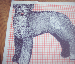 Rrrportuguese_waterdog2_comment_163570_preview