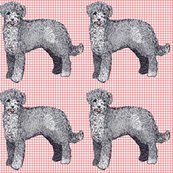 Rrrportuguese_waterdog2_shop_thumb